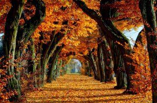 herfst Malaga